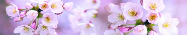 Цветы и растения_200