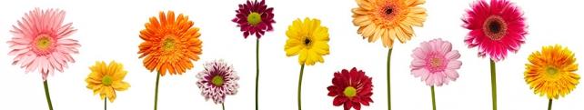 Цветы и растения_203