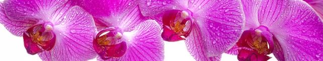 Цветы и растения_206