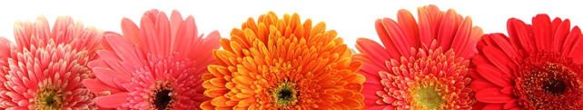 Цветы и растения_208