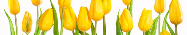 Цветы и растения_210