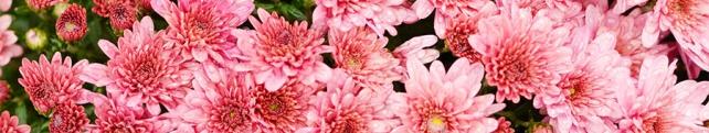 Цветы и растения_211