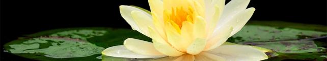 Цветы и растения_212