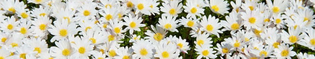 Цветы и растения_213