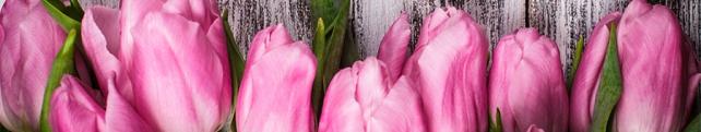Цветы и растения_217