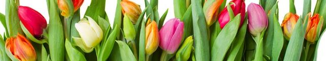 Цветы и растения_218