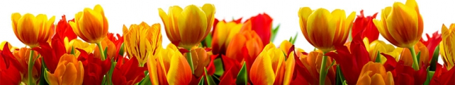 Цветы и растения_21