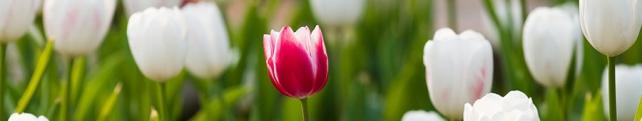 Цветы и растения_220