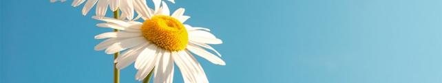 Цветы и растения_221