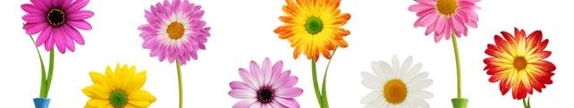 Цветы и растения_224