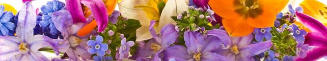 Цветы и растения_225