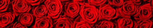 Цветы и растения_226
