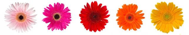 Цветы и растения_228