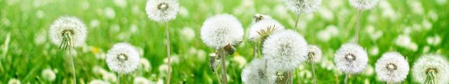 Цветы и растения_229