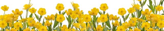 Цветы и растения_230