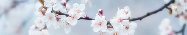 Цветы и растения_231