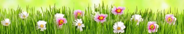 Цветы и растения_232