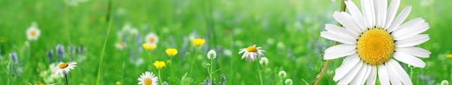 Цветы и растения_233