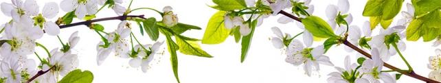 Цветы и растения_234