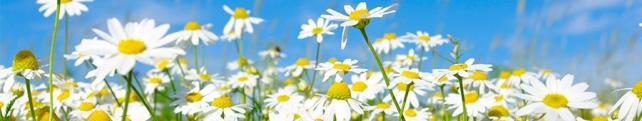Цветы и растения_235