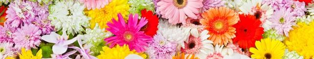 Цветы и растения_236
