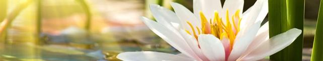 Цветы и растения_237