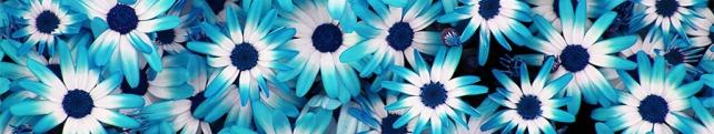 Цветы и растения_239