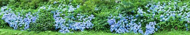 Цветы и растения_23