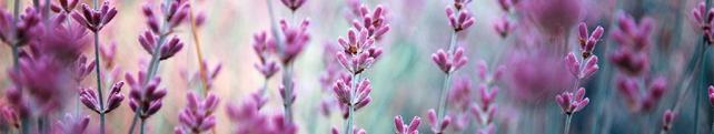 Цветы и растения_242