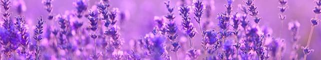 Цветы и растения_244