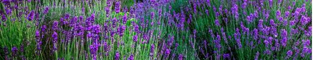 Цветы и растения_245