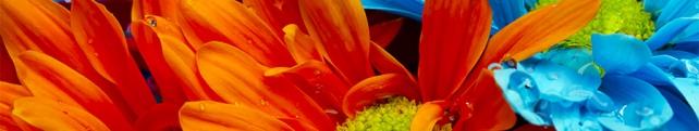 Цветы и растения_246