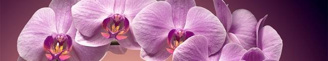 Цветы и растения_254