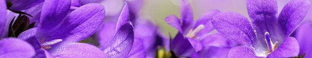 Цветы и растения_262