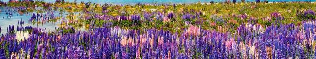 Цветы и растения_263