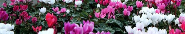 Цветы и растения_267
