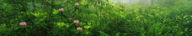 Цветы и растения_275
