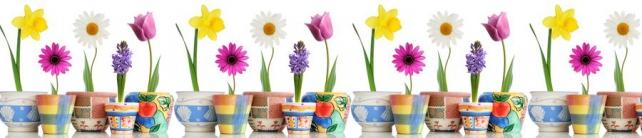Цветы и растения_288