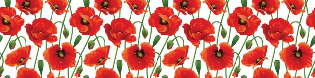 Цветы и растения_289