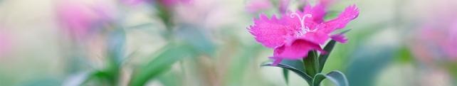 Цветы и растения_28