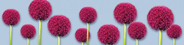 Цветы и растения_290