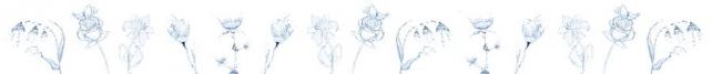 Цветы и растения_292