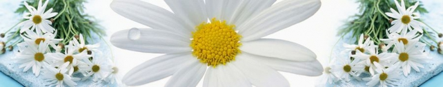 Цветы и растения_299