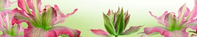 Цветы и растения_30