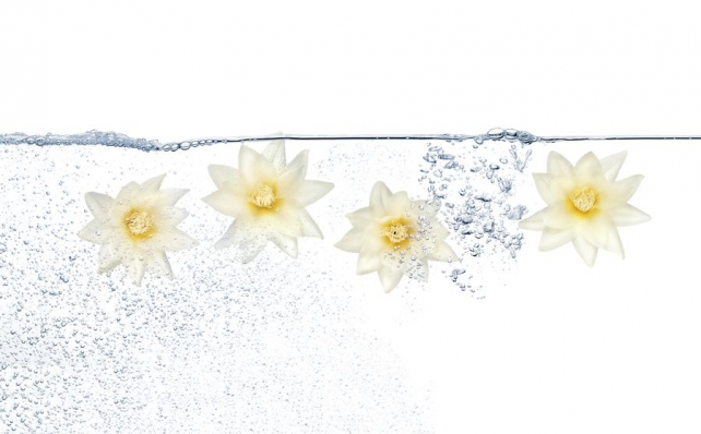 Цветы и растения_328