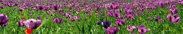 Цветы и растения_32