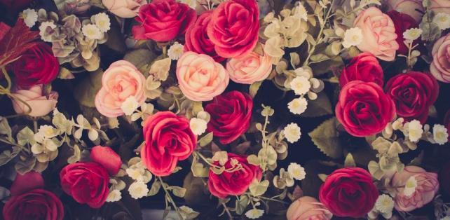 Цветы и растения_367