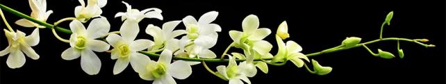 Цветы и растения_36