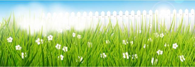 Цветы и растения_372