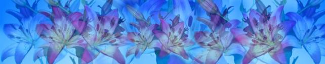 Цветы и растения_382